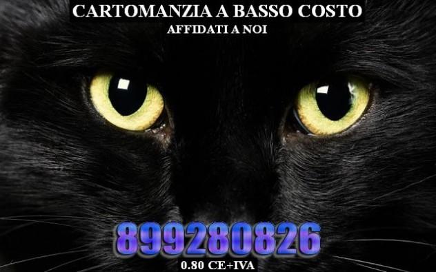 gatto-nero
